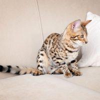 Котёнок на диване