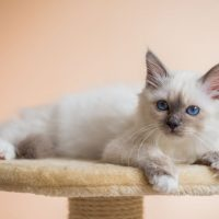 Серый котенок лежит на подставке