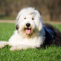 Милейший пёс на лугу