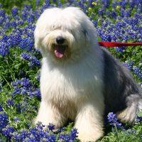 Пёс среди цветов