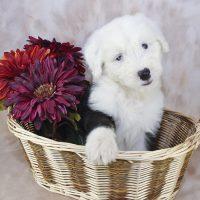 Щенок в корзине с красными цветами