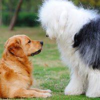 Две собаки изучают друг друга