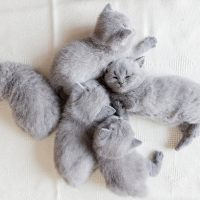 Пушистые спящие котята