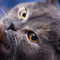 Хмурый кот покусывает палец