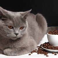 Породистый кот и зёрна кофе