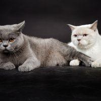 Две кошки на чёрном фоне
