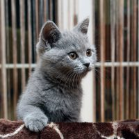Серый котёнок навострил ушки