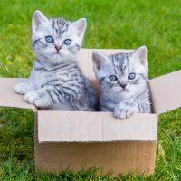 Два котёнка в картонной коробке