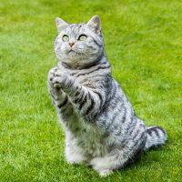 Кот в позе просителя