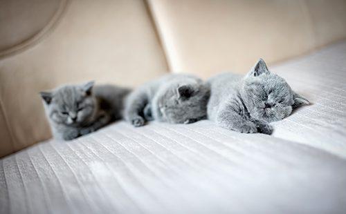 Три котёнка спят вповалку