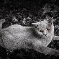 Серая кошка на чёрно-белом ковре