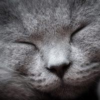 Упитанная морда спящего кота