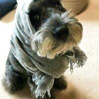Смешной пёсик в шарфе