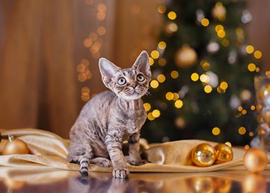 Девон порода кошек