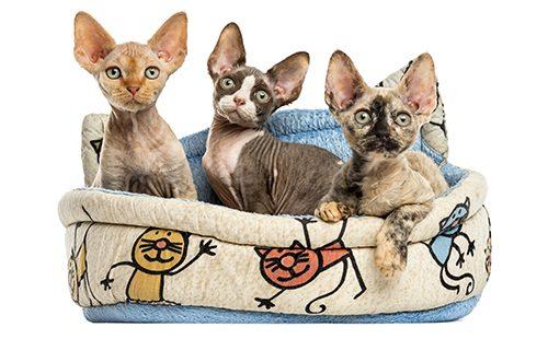 Котятки в корзине на белом фоне