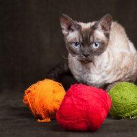 Кот и разноцветные клубки ниток