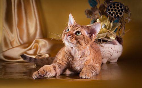 Кошка в деревенском интерьере