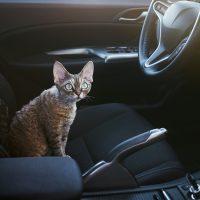 Котёнок в автомобиле