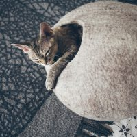 Кошка спит в круглом войлочном домике