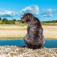Пёс на берегу реки
