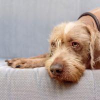 Пёс на сером диване