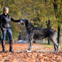 Девушка и волкодав в парке