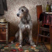 Двухлетний пёс в комнате