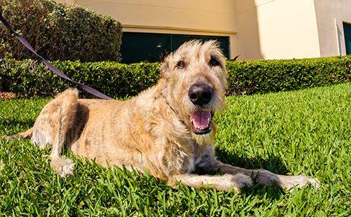 Милый пёс на траве