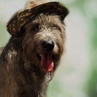 Пёс в шляпе