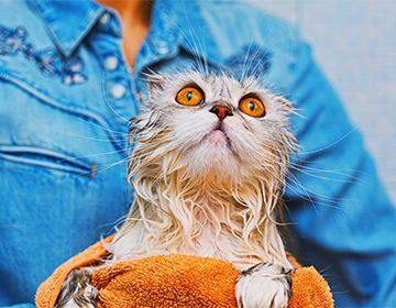 можно ли помыть кота хозяйственным мылом