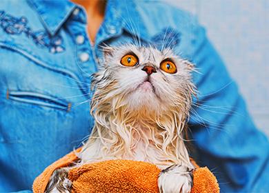 Как мыть котят