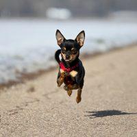 Пёсик летит над дорогой