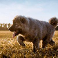 Весёлый бегущий щенок