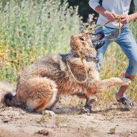 Человек играет с большой собакой