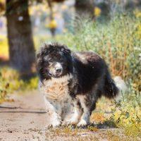 Пёс в осеннем парке