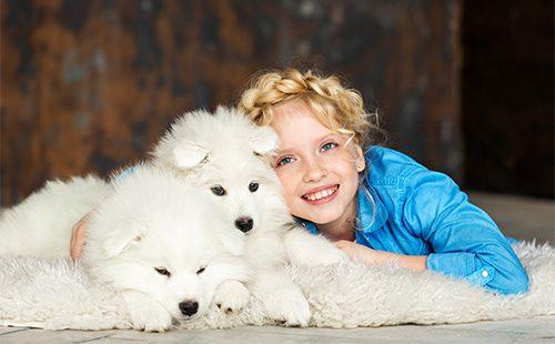 Девочка со щенками самоедской лайки