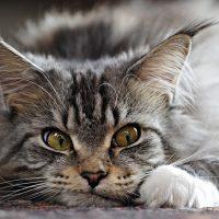 Смешная кошачья мордашка