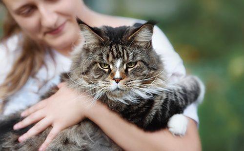 Хмурый кот на руках женщины