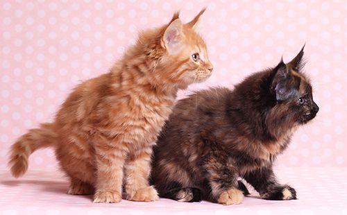 Два озорных котёнка