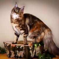 Кошка с пушистым хвостом