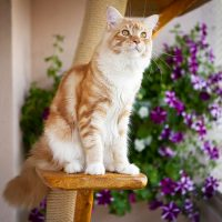 Котёнок сидит на подставке для цветов