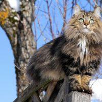 Кот-викинг сидит на пне