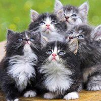 Уморительные пушистые котята