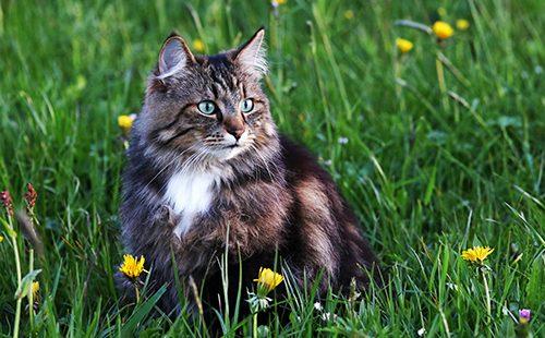 Молодой кот охотится на вечернем лугу