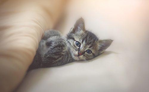 Крохотный котёнок на постели
