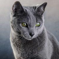 У кошки изумрудные глаза