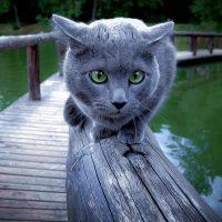 Кот на перилах моста