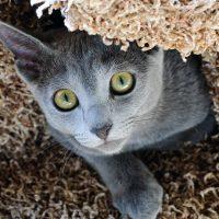 Кошечка играет в прятки
