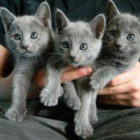 Три котёнка в охапке