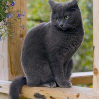 Милый кот на веранде
